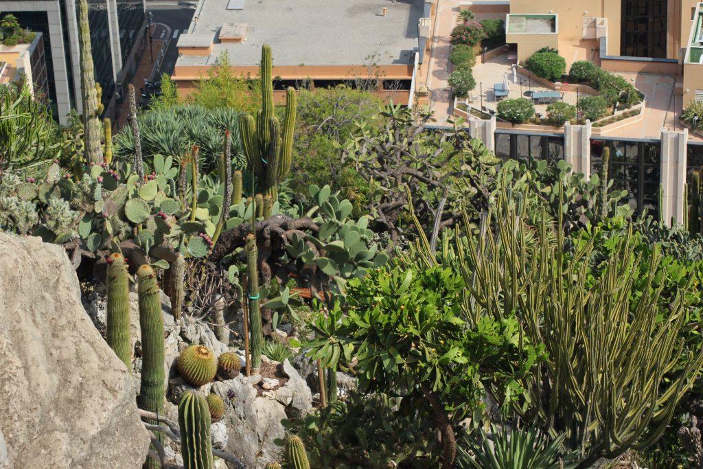 Giardino Esotico di Monaco